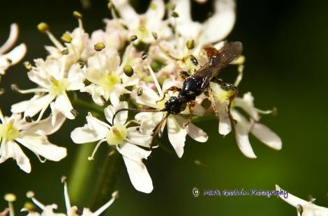 UN-Identified Fly