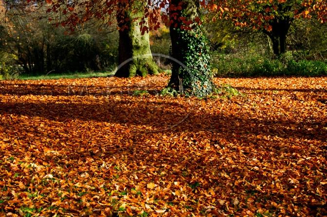 Autumn_Carpet_1