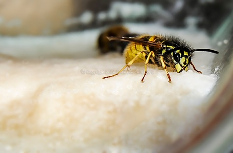 The last remaining Wasp